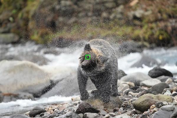 升级的实时动物眼部对焦样照