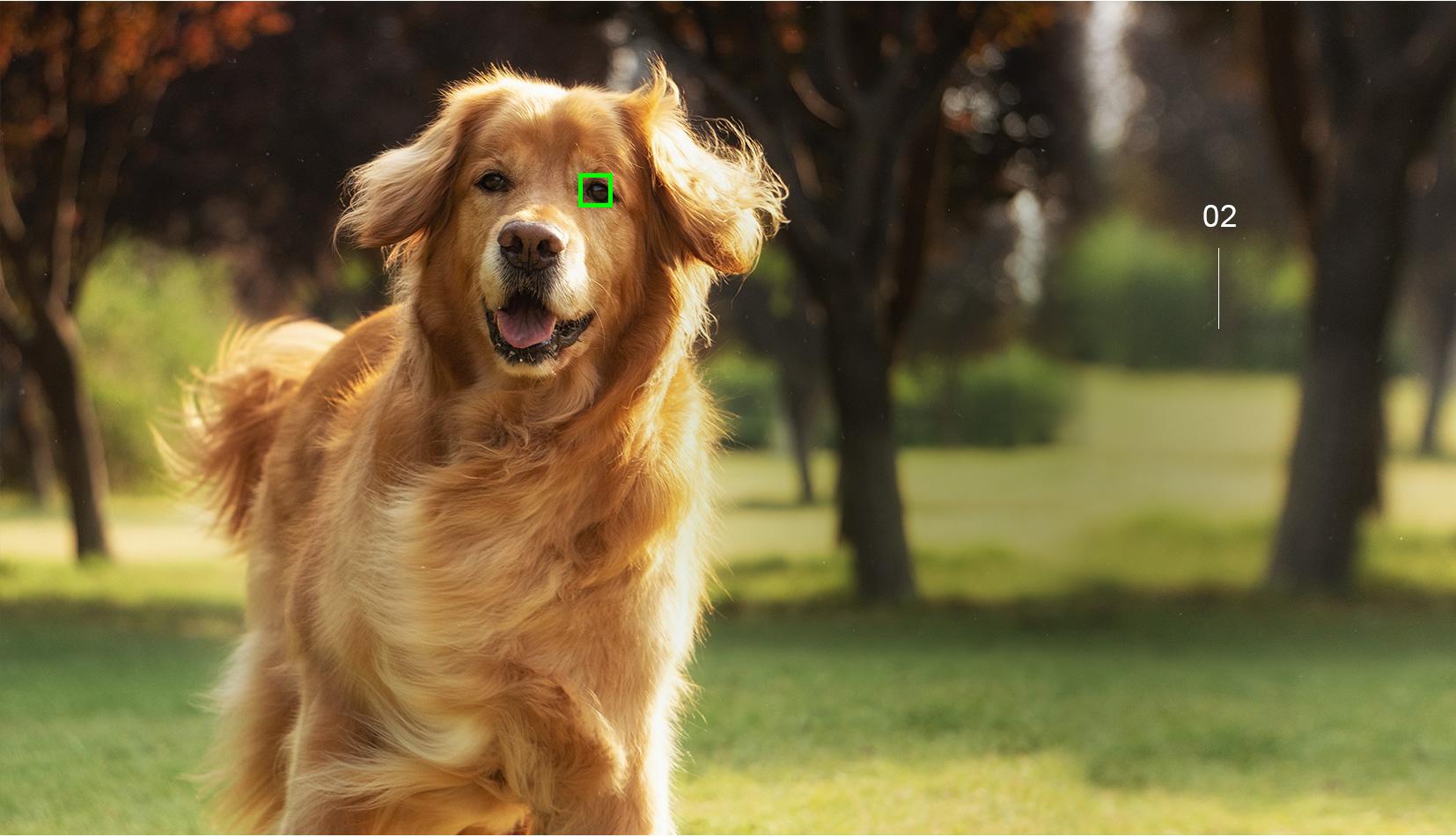 实时动物眼部对焦样照
