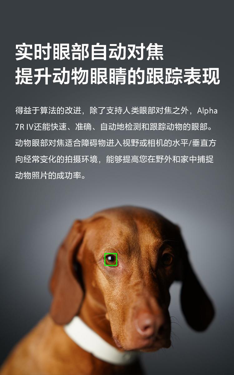 實時眼部自動對焦,提升動物眼睛的跟蹤表現